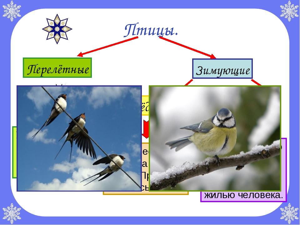 Птицы. Перелётные Зимующие Осёдлые Кочующие Улетают осенью в тёплые края, при...