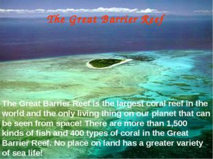 The Great Barrier Reef The Great Barrier Reef is the largest coral reef in th