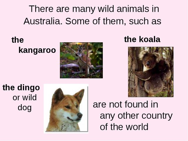 There are many wild animals in Australia. Some of them, such as the kangaroo...