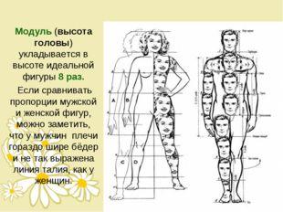 Модуль (высота головы) укладывается в высоте идеальной фигуры 8 раз. Если сра