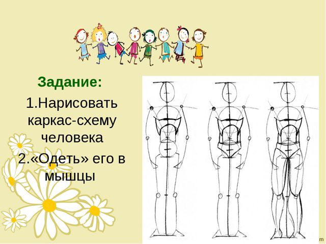 Задание: Нарисовать каркас-схему человека «Одеть» его в мышцы