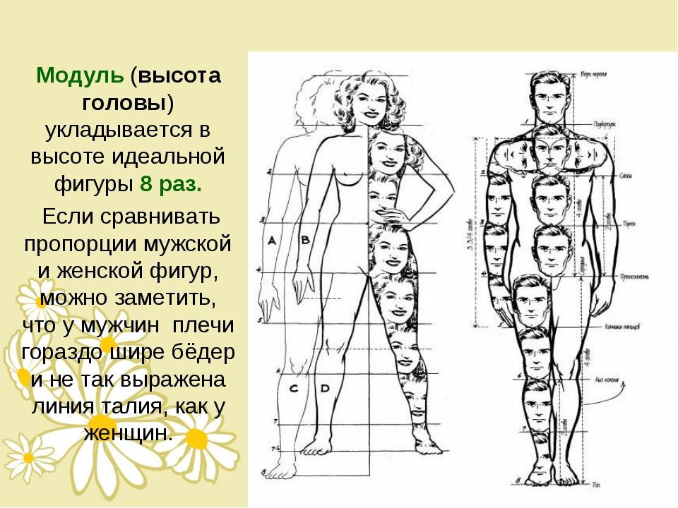 Модуль (высота головы) укладывается в высоте идеальной фигуры 8 раз. Если сра...