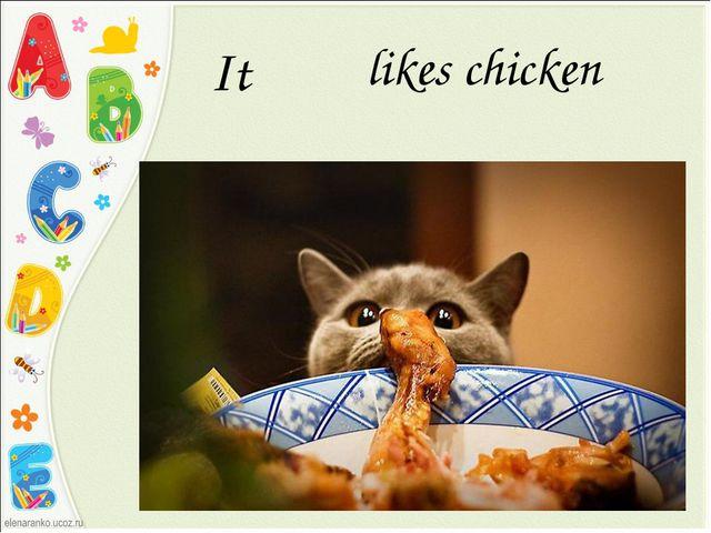 It likes chicken