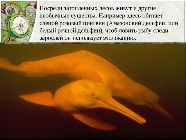 Посреди затопленных лесов живут и другие необычные существа. Например здесь о...