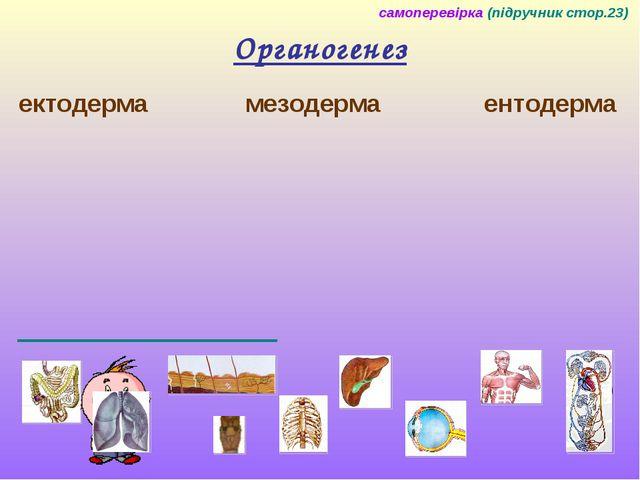Органогенез ектодерма мезодерма ентодерма самоперевірка (підручник стор.23) 9...