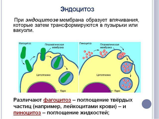 Сусанинская средняя школа учитель биологии Карпушева Анна Эдуардовна