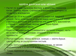 БЕРЁЗА ДАУРСКАЯ ИЛИ ЧЁРНАЯ  Растет по всему Дальнему Востоку, в Монголии, Се