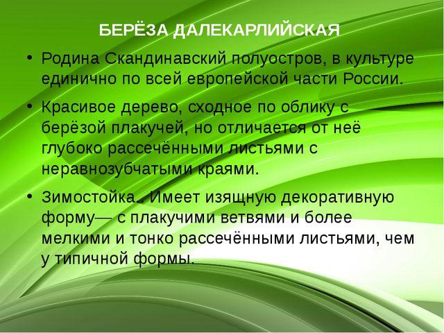 БЕРЁЗА ДАЛЕКАРЛИЙСКАЯ Родина Скандинавский полуостров, в культуре единично по...