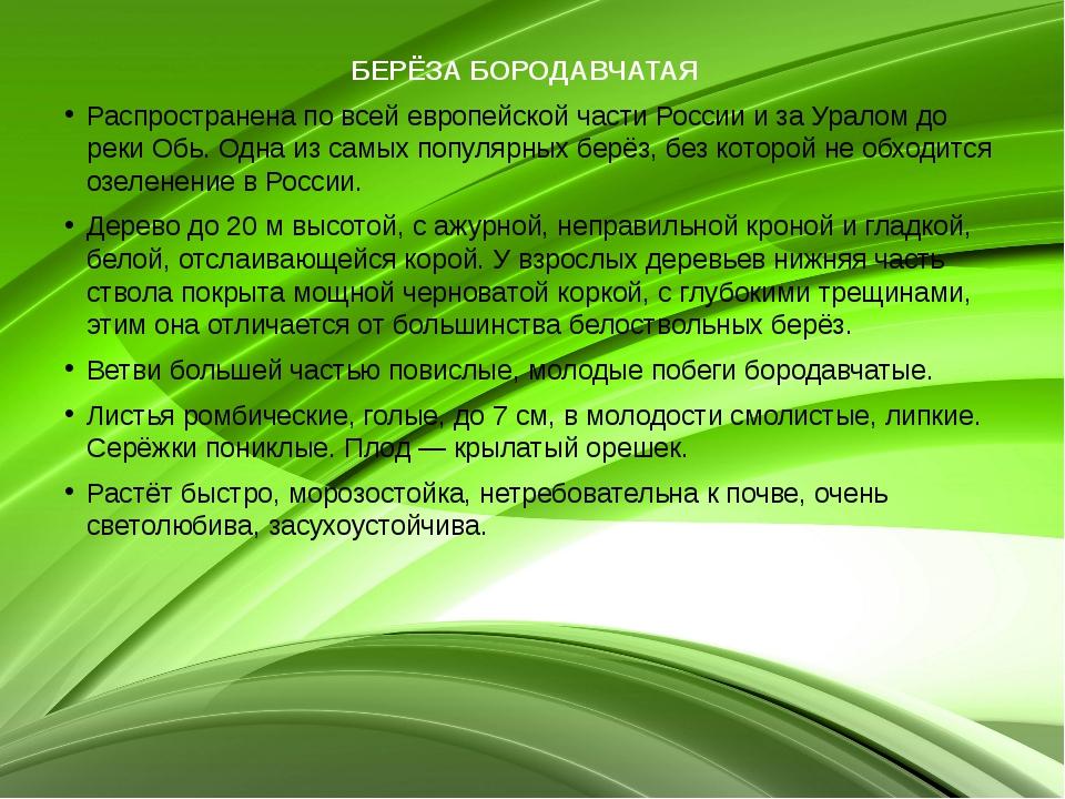 БЕРЁЗА БОРОДАВЧАТАЯ  Распространена по всей европейской части России и за Ур...