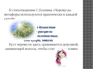 В стихотворении С.Есенина «Черемуха» метафоры используются практически в каж