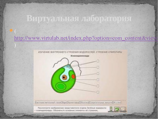 Виртуальная лаборатория (http://www.virtulab.net/index.php?option=com_content...