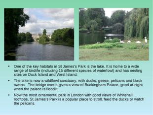One of the key habitats in St James's Park is the lake. It is home to a wide