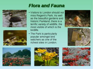 Flora and Fauna Visitors to London should not miss Regent's Park. As well as