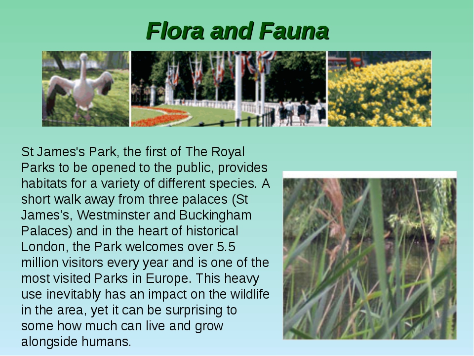 Flora and Fauna St James's Park, the first of The Royal Parks to be opened to...
