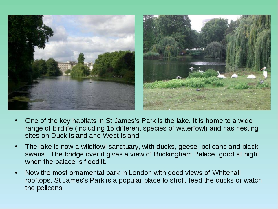 One of the key habitats in St James's Park is the lake. It is home to a wide...