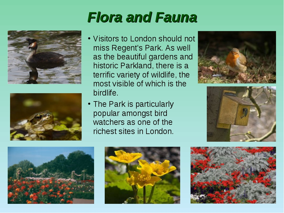 Flora and Fauna Visitors to London should not miss Regent's Park. As well as...