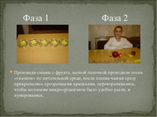 Фаза 1 Фаза 2 Произведя смывы с фрукта, ватной палочкой проводили посев «газ