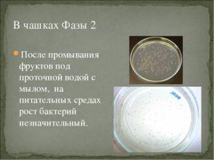 В чашках Фазы 2 После промывания фруктов под проточной водой с мылом, на пита