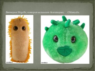 Бактерия Shigella, которая вызывает дизентерию, Chlamydia.