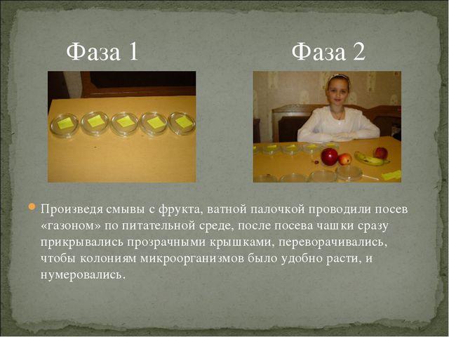 Фаза 1 Фаза 2 Произведя смывы с фрукта, ватной палочкой проводили посев «газ...