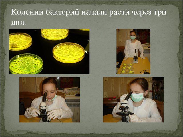Колонии бактерий начали расти через три дня.
