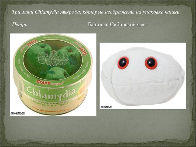 Три мини Chlamydia микроба, которые изображены на упаковке чашки Петри Бацилл...