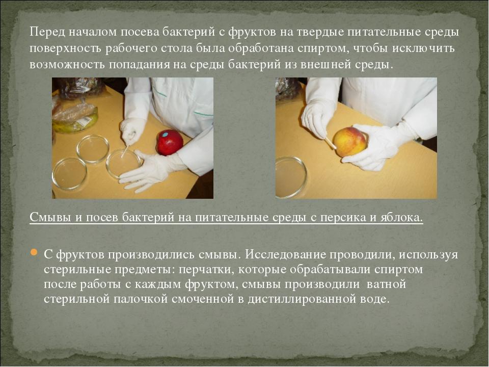 Перед началом посева бактерий с фруктов на твердые питательные среды поверхно...