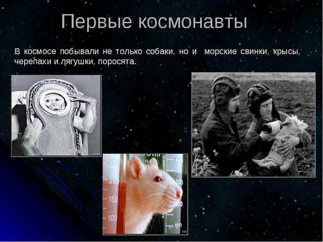 В космосе побывали не только собаки, но и морские свинки, крысы, черепахи и л...