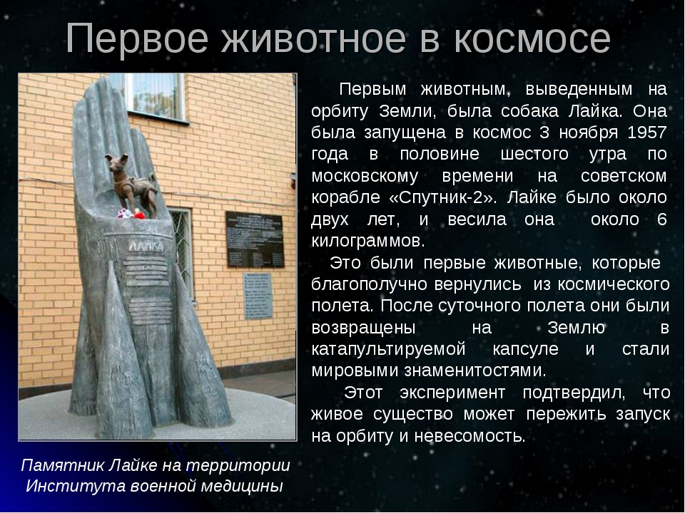 Первым животным, выведенным на орбиту Земли, была собака Лайка. Она была зап...