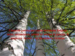 Своими раскидистыми ветвями Береза мать защищала дочек от ветра и дождя. А ж