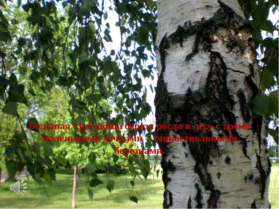 Большая красавица береза росла в лесу с тремя маленькими дочками – тонкоство...