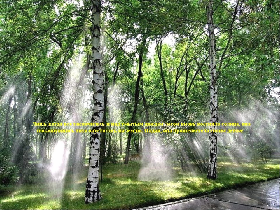 Лишь когда все закончилось и над умытым дождем лесом вновь воссияло солнце,...