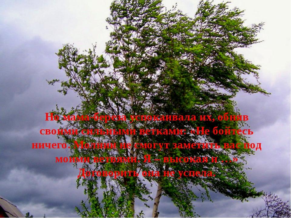 Но мама-береза успокаивала их, обняв своими сильными ветками: «Не бойтесь ни...