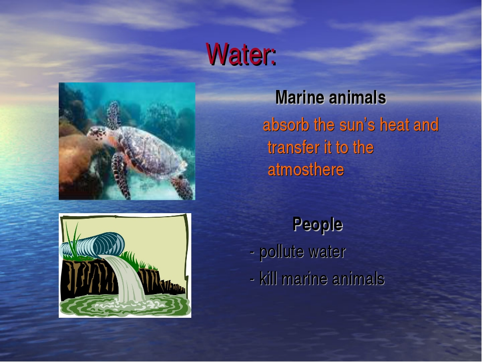 Water: Marine animals absorb the sun's heat and transfer it to the atmosthere...