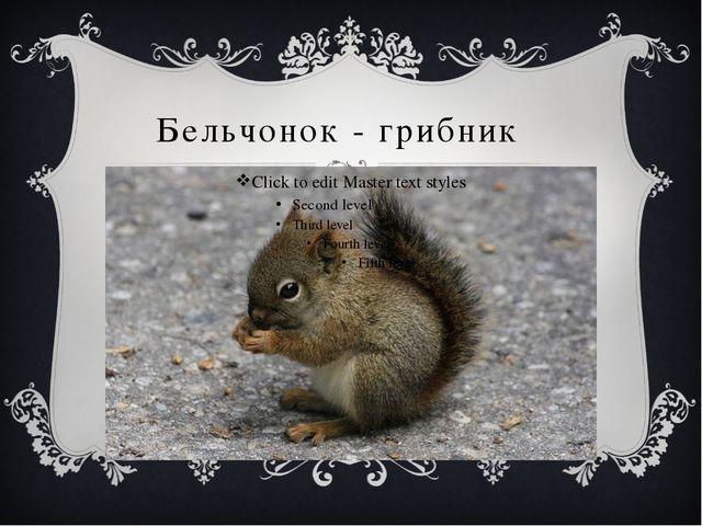 Бельчонок - грибник