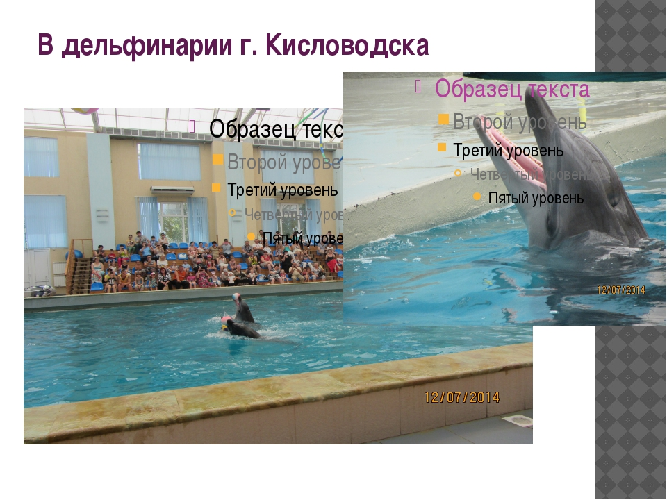 В дельфинарии г. Кисловодска