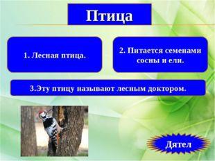1. Лесная птица. 2. Питается семенами сосны и ели. 3.Эту птицу называют лесны