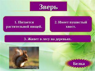 1. Питается растительной пищей. 2. Имеет пушистый хвост. 3. Живет в лесу на д