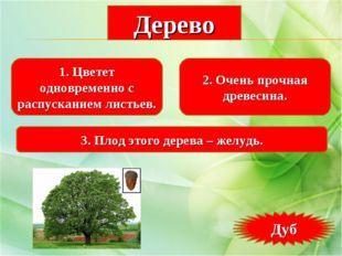 1. Цветет одновременно с распусканием листьев. 2. Очень прочная древесина. 3.