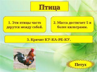 1. Эти птицы часто дерутся между собой. 2. Масса достигает 5 и более килограм