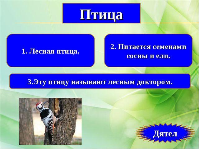 1. Лесная птица. 2. Питается семенами сосны и ели. 3.Эту птицу называют лесны...