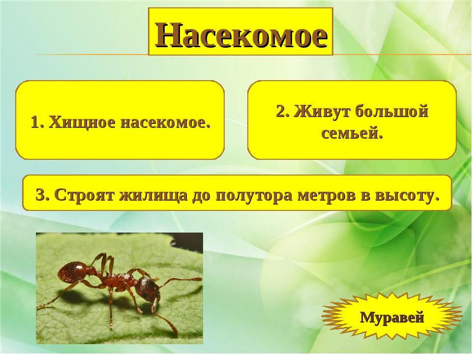 1. Хищное насекомое. 2. Живут большой семьей. 3. Строят жилища до полутора ме...
