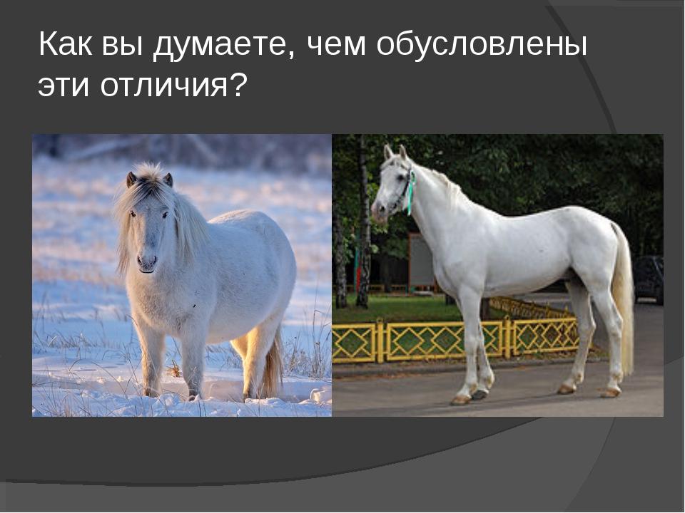 Как вы думаете, чем обусловлены эти отличия?