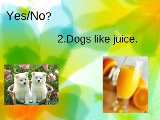 Yes/No? 2.Dogs like juice.