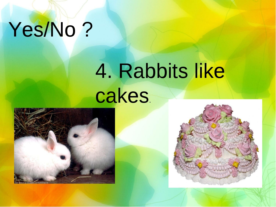 Yes/No ? 4. Rabbits like cakes.
