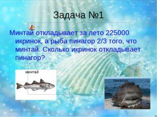 Задача №1 Минтай откладывает за лето 225000 икринок, а рыба пинагор 2/3 того,
