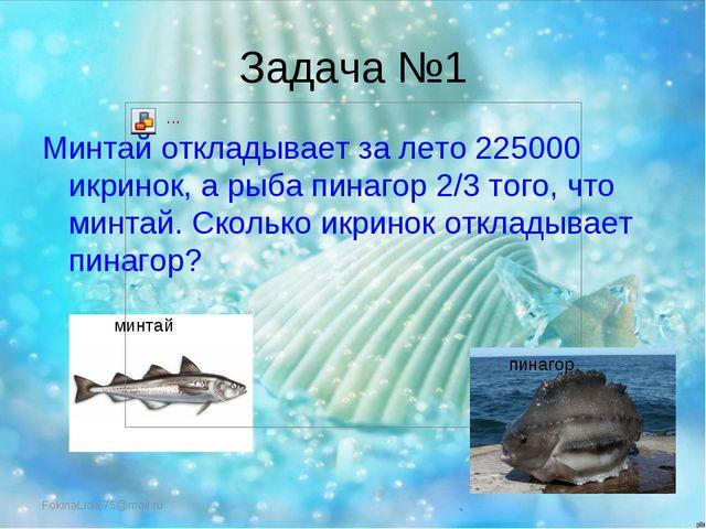 Задача №1 Минтай откладывает за лето 225000 икринок, а рыба пинагор 2/3 того,...