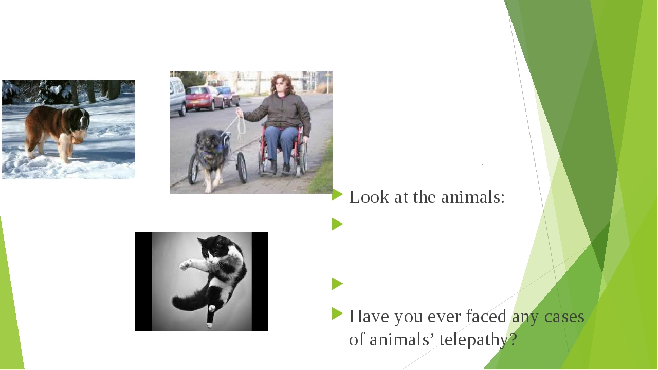 Look at the animals: 	 								 Have you ever faced any cases of animals' te...