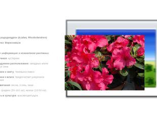 Азалия, рододендрон (Azalea, Rhododendron) Семейство: Вересковые  Краткая и
