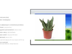 Алоэ, столетник (Aloe) Семейство: Алоэвидные  Краткая информация о комнатно